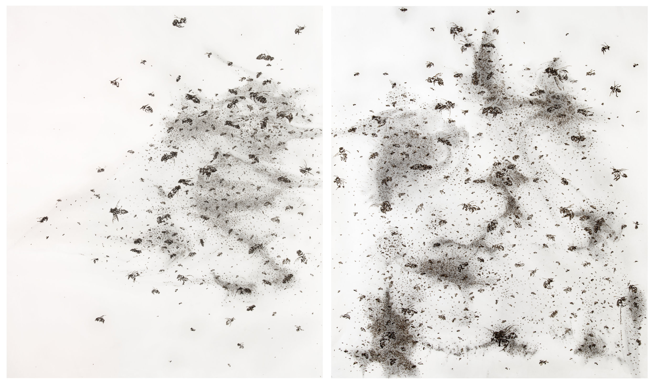 Bees of Bees D1  2012 - 2015  diptych, gum bichromate print with honeybees on paper  50 x 58 inches each panel, 102 x 58 inches