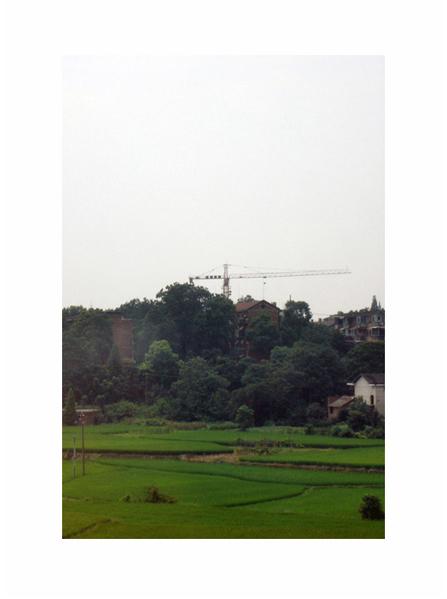 999 Cranes 03 by MatthewBrandt.com