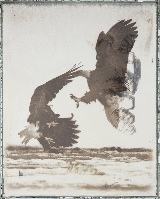 Eagle 62C  2017-2019  Daguerreotypes made from American Silver Eagle coins and glass  10 x 8 x 1 in.