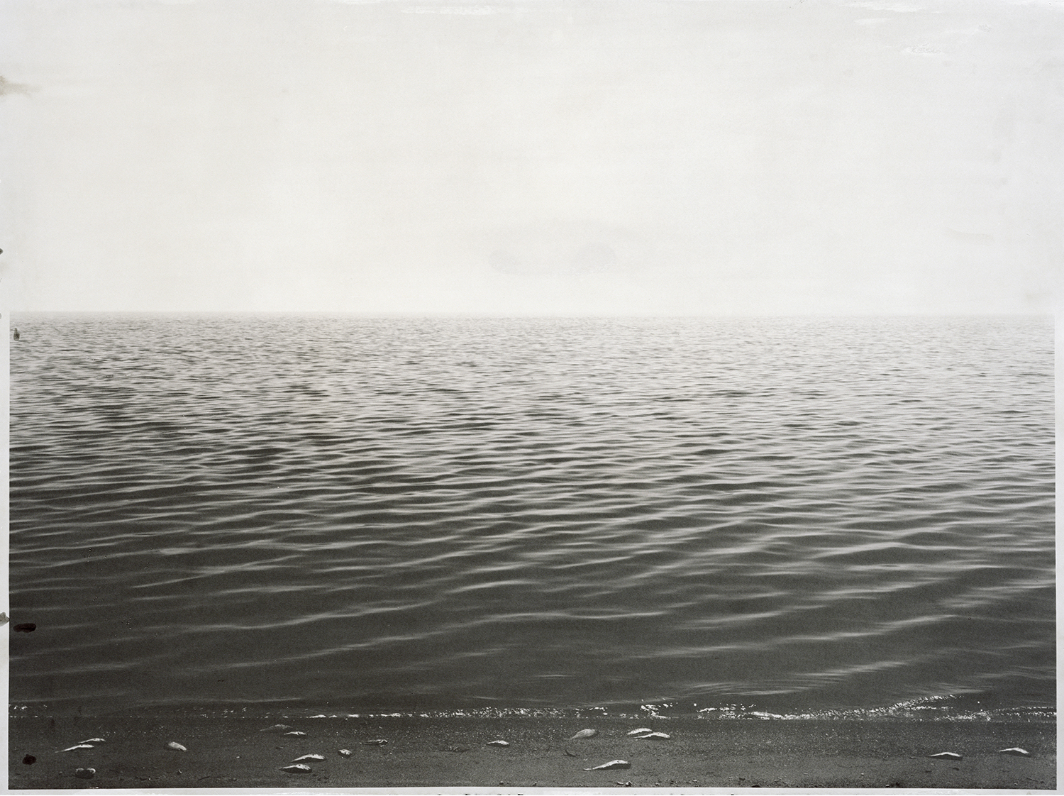 Salton Sea A1  2006  salted paper print with Salton Sea water  30 x 40 inches