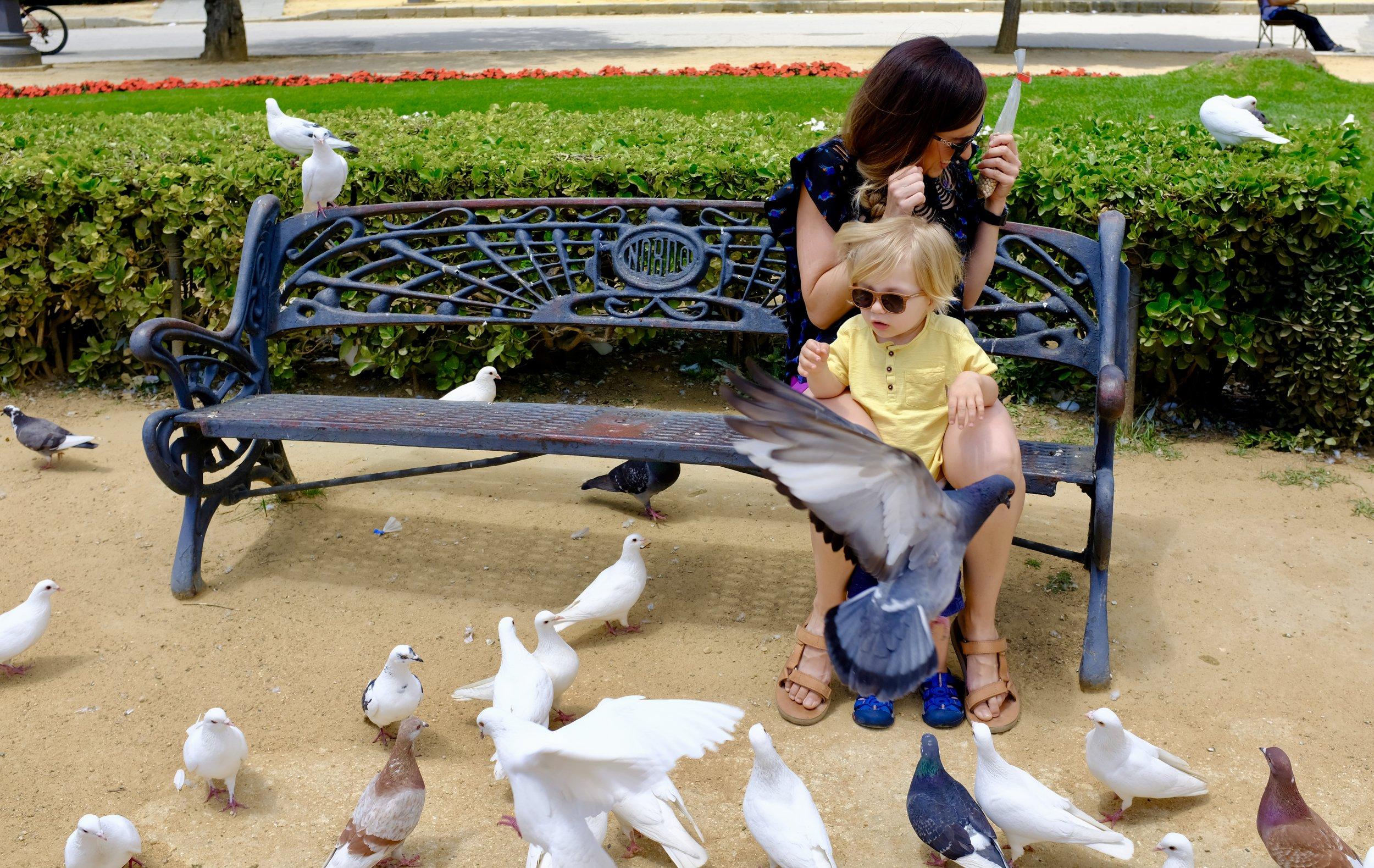 Plaza de America Pigeon Park_City Nibbler_Seville