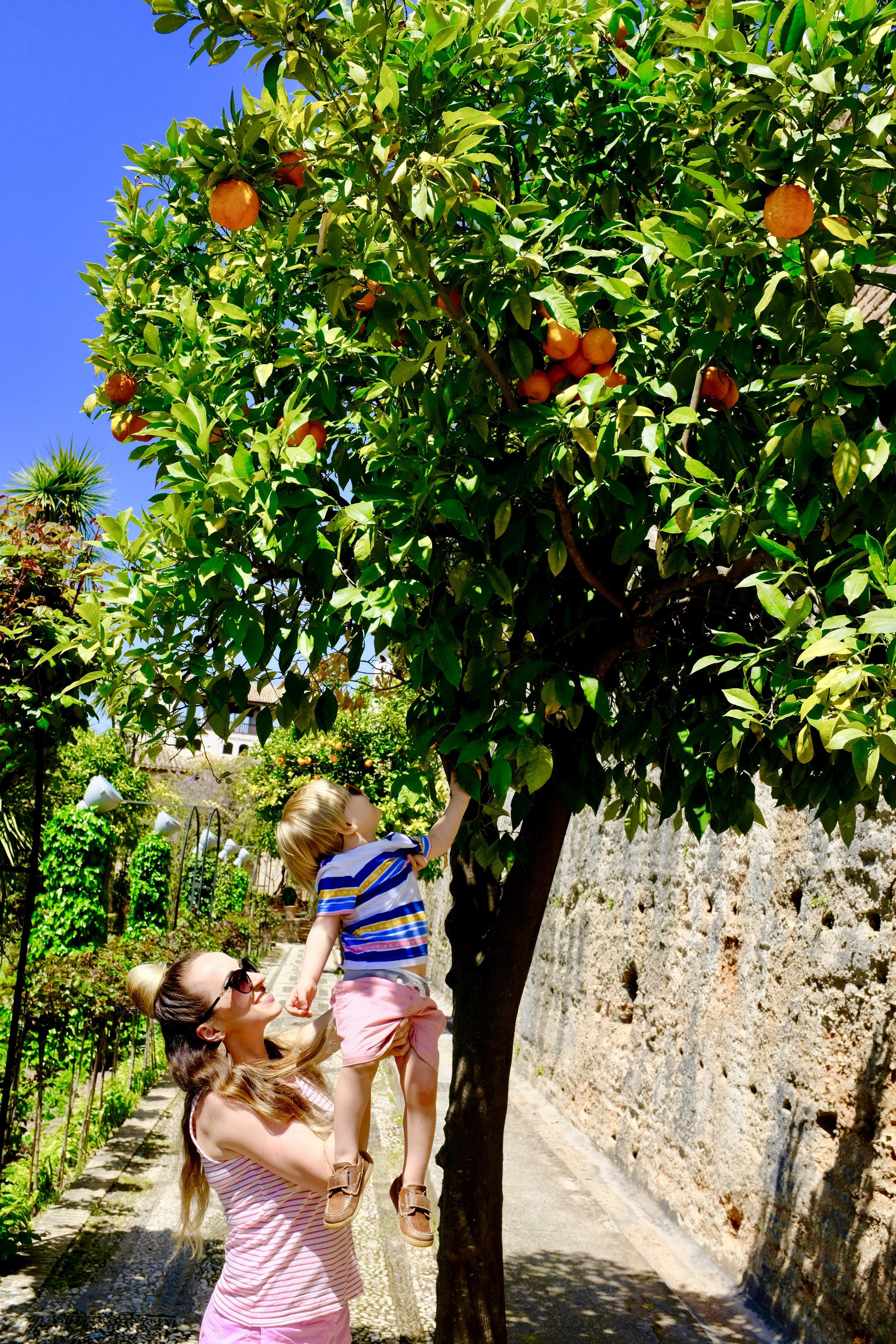 Alhambra Gardens_City Nibbler_Granada Spain