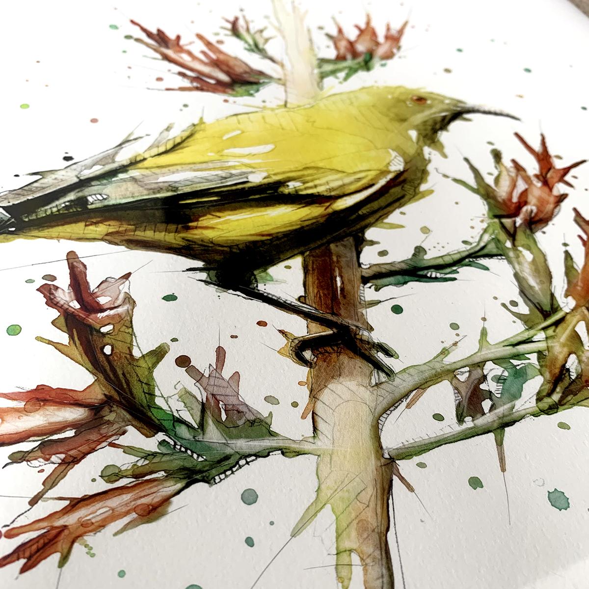 Bellbird_Closeup2.jpg