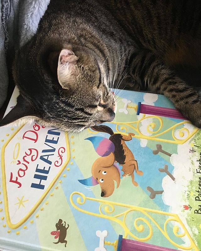 Abby the Tabby fell asleep reading her favorite book. 😍