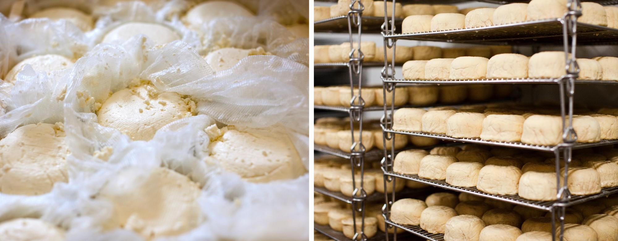 cheese-production-good-eggs.jpeg