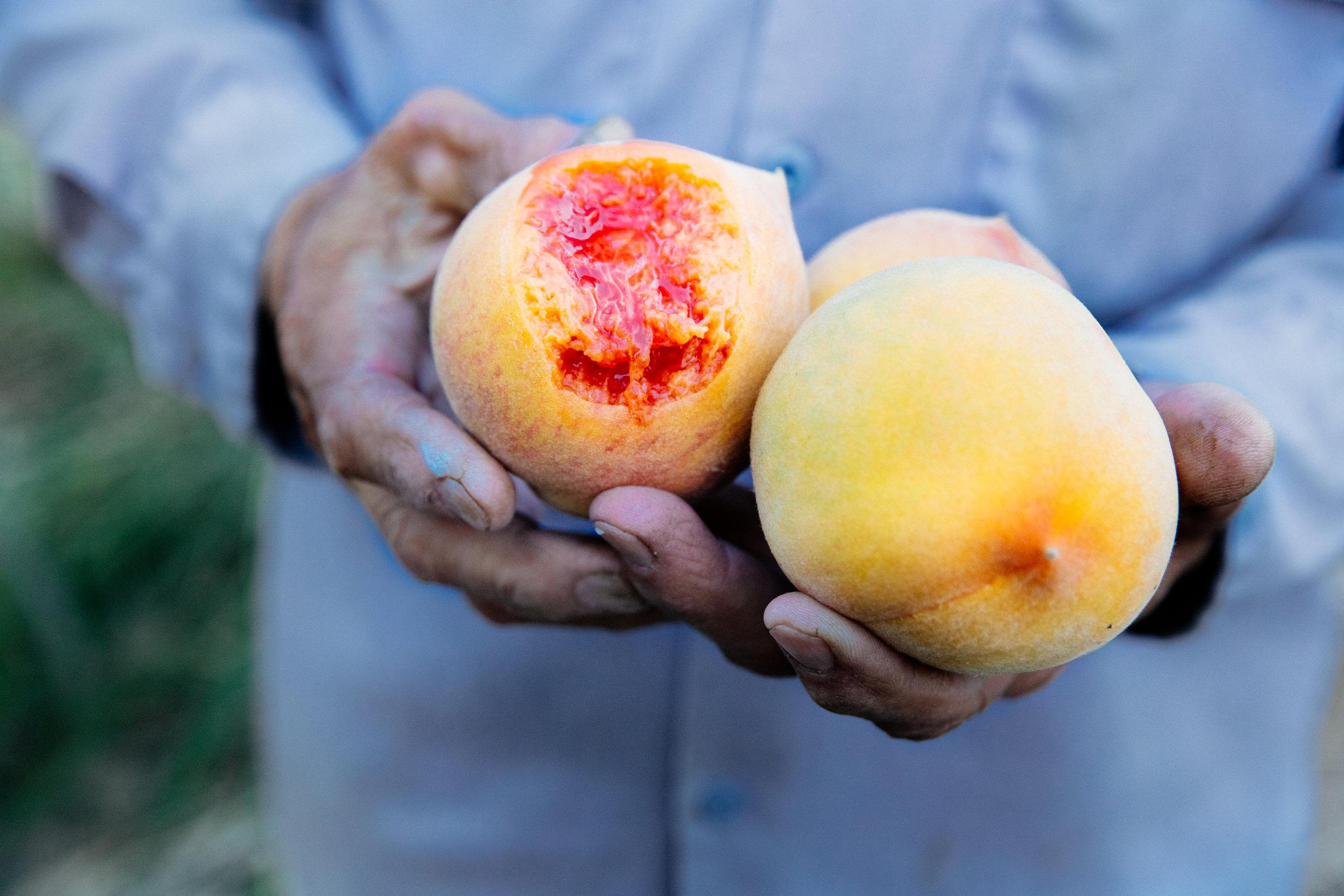 masumoto-peaches-suncrest-good-eggs