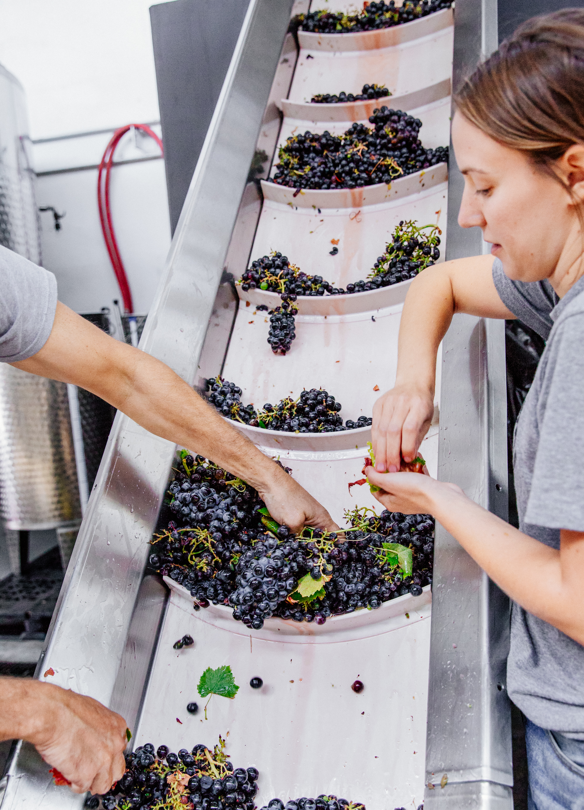 sorting-grape-leaves-urban-winery-good-eggs-edit.jpg