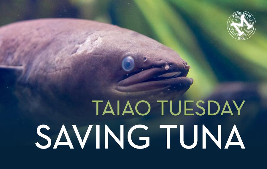 TT Saving Tuna.jpg