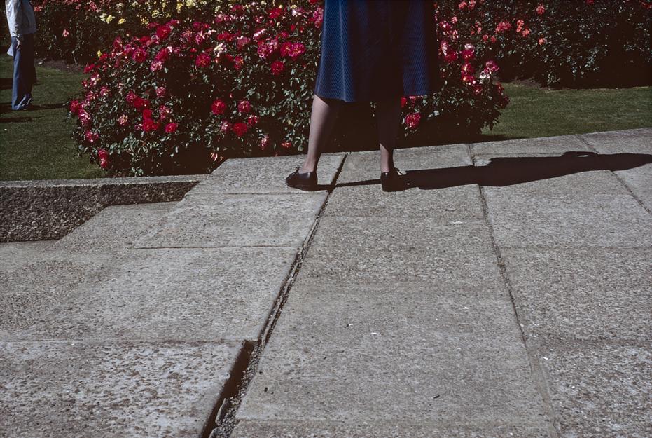 Joanna Margaret PaulUntitled (Wellington Botanic Garden), 2013