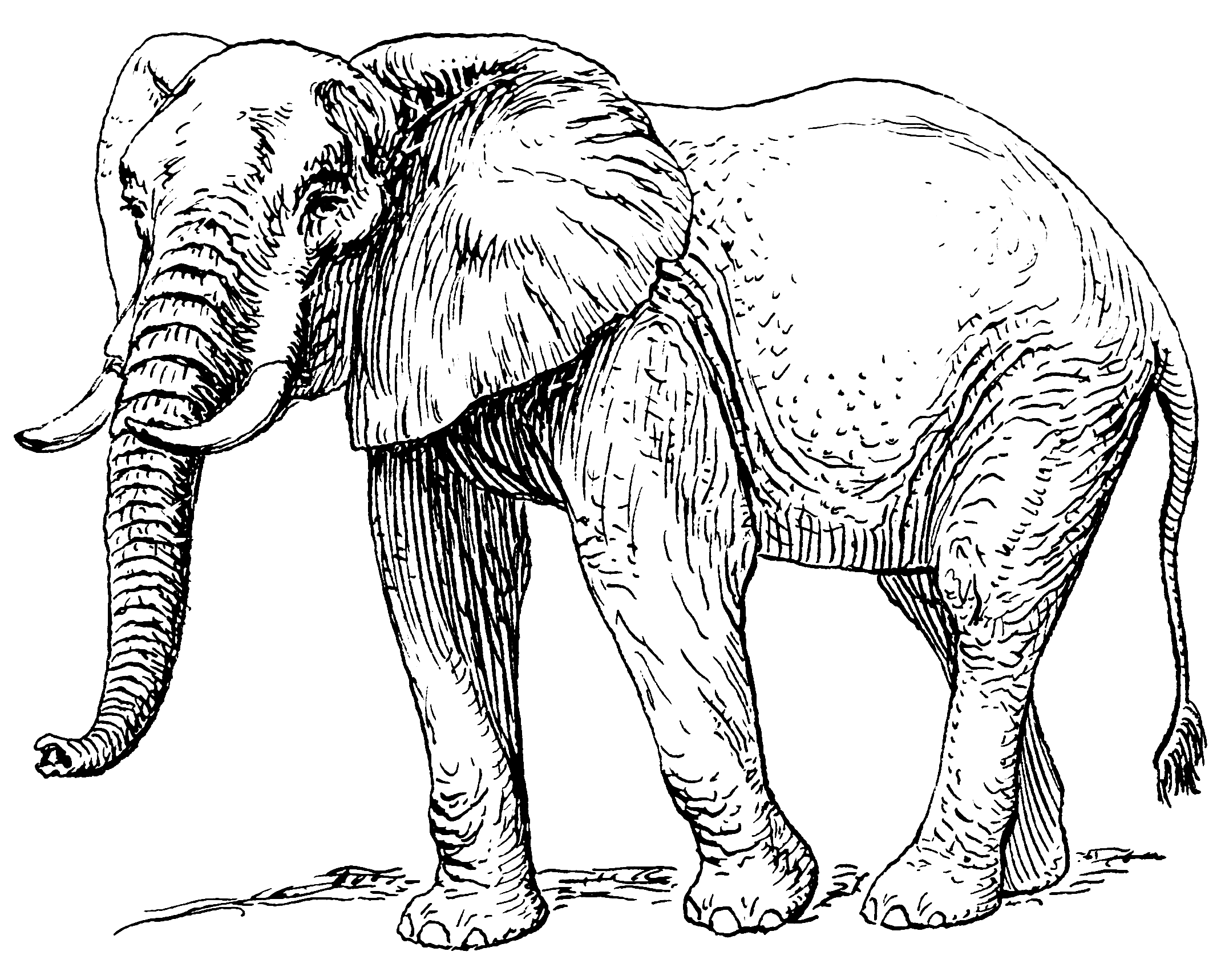 african_elephant_psf.png