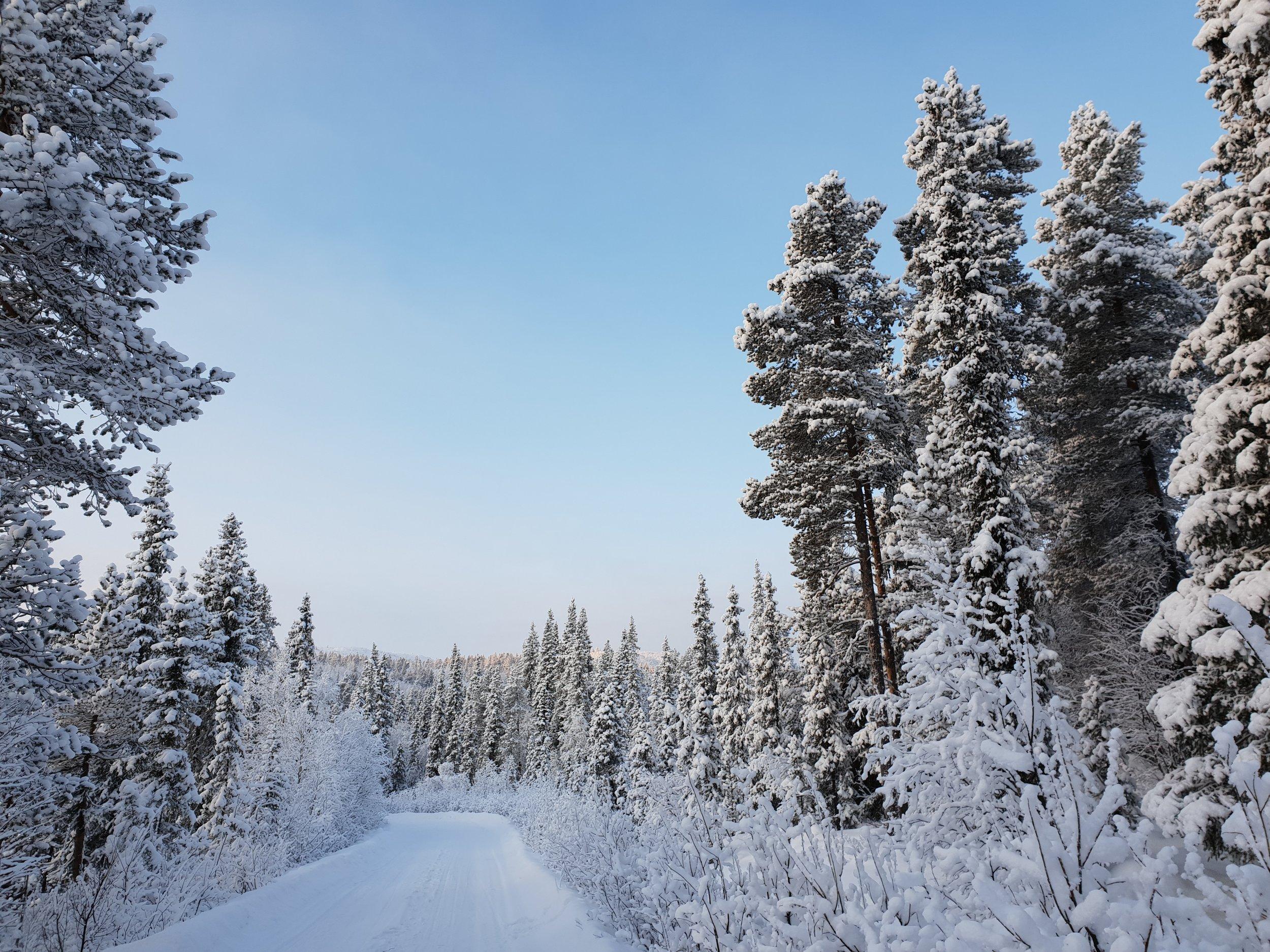 The frozen landscape of Lapland.