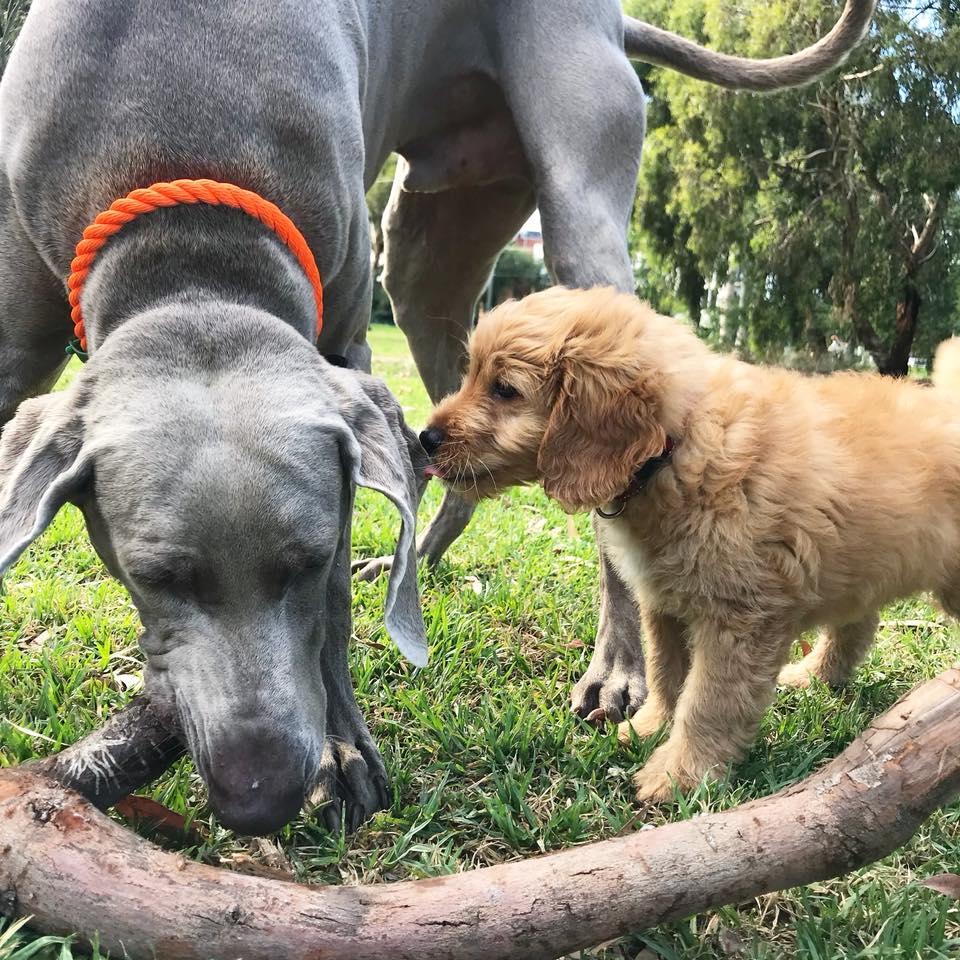 Melbourne Dog Walking Adventure