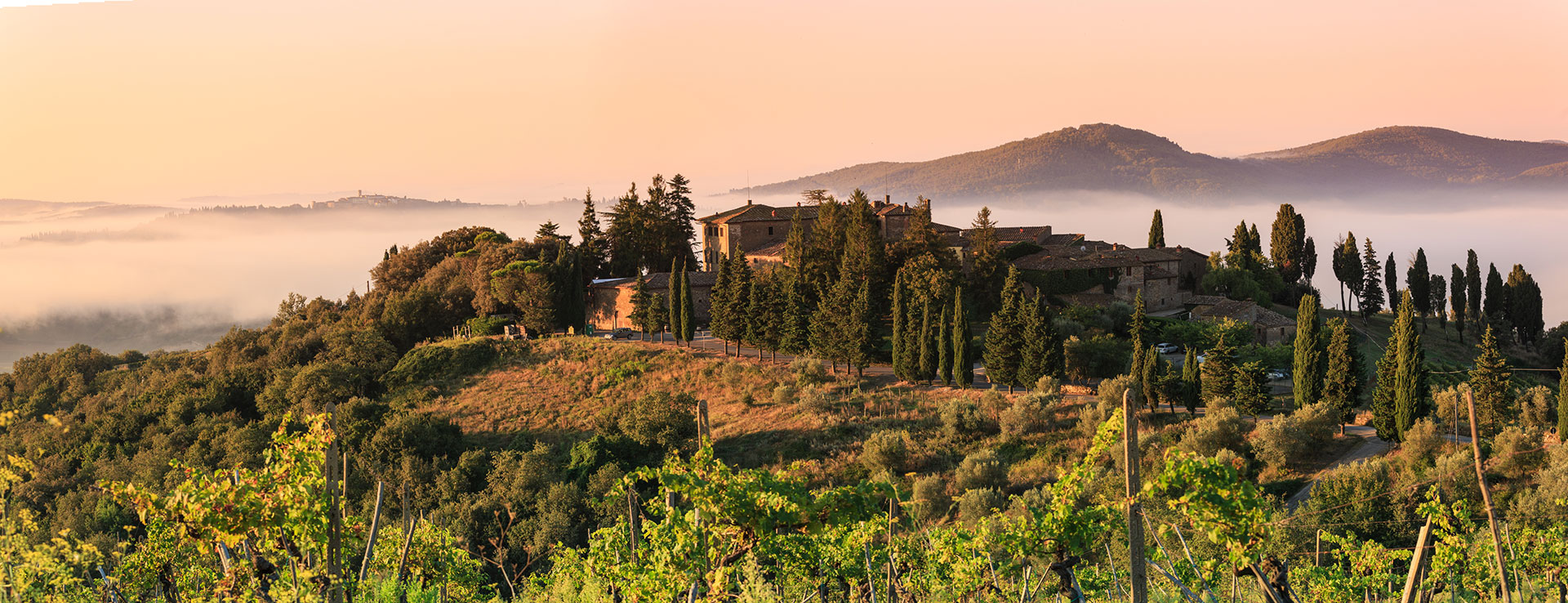 Castelvecchi_hills+cellar.jpg