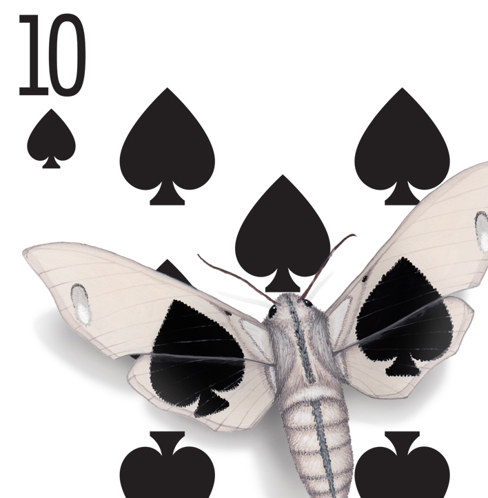 The corner of a 10 of Spades playing card design. The design has been hand-painted with moths that look like they have evolved a wing pattern that camouflages them on the card.