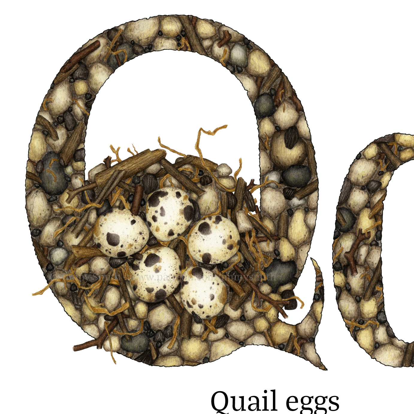 A 'sneak peek' (a partial image) of two letter Q's filled with a pattern of brown, grey, and cream pebbles, twigs, and quail eggs. There are quail eggs in a nest in the hollow of the uppercase letter.