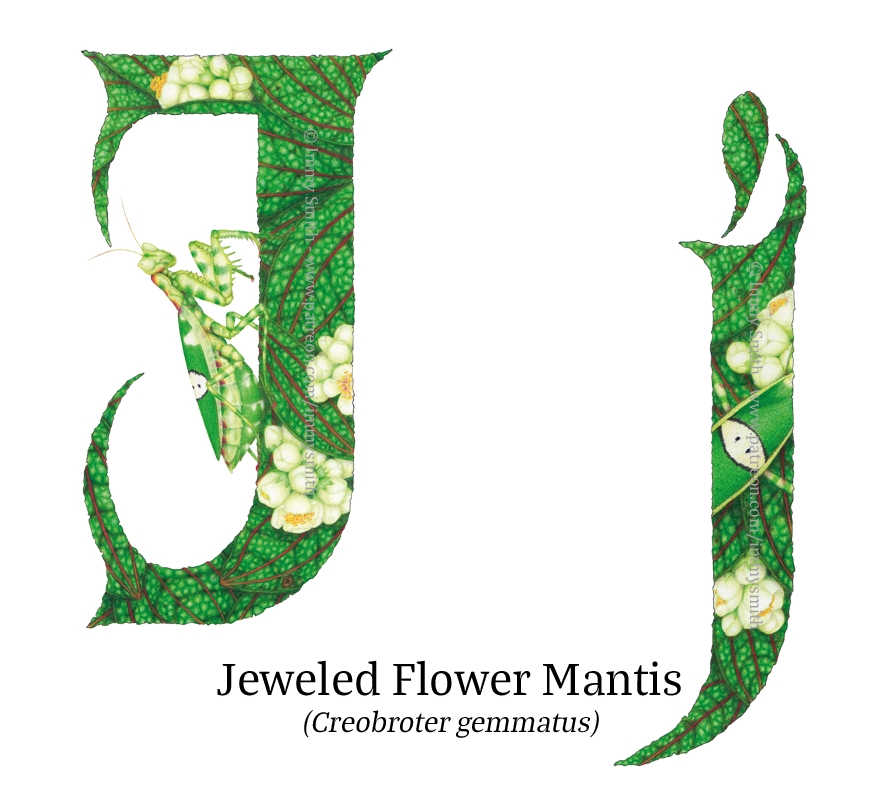 Two letter J's (lowercase on left, uppercase on right) filled with a pattern of rich green leaves, white flowers, & jeweled flower mantises. One of the insects is climbing the uppercase J.