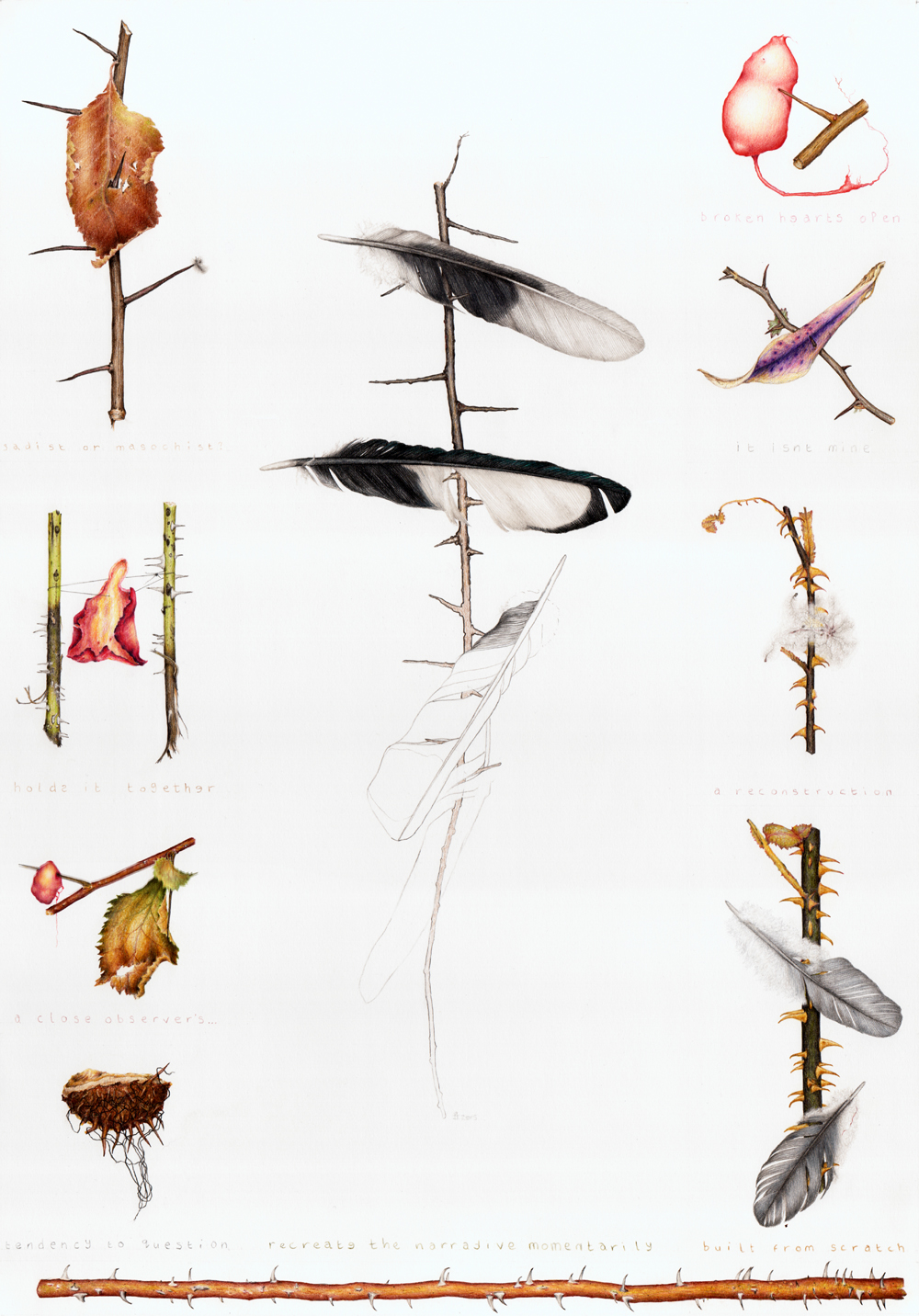 A colour pencil drawing of spiny twigs with small debris items (feathers, petals, leaves) impaled on them.