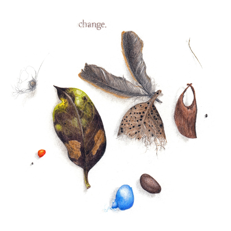 A colour pencil drawing of dead leaves, feathers, and seeds, with the word 'change' drawn onto it.