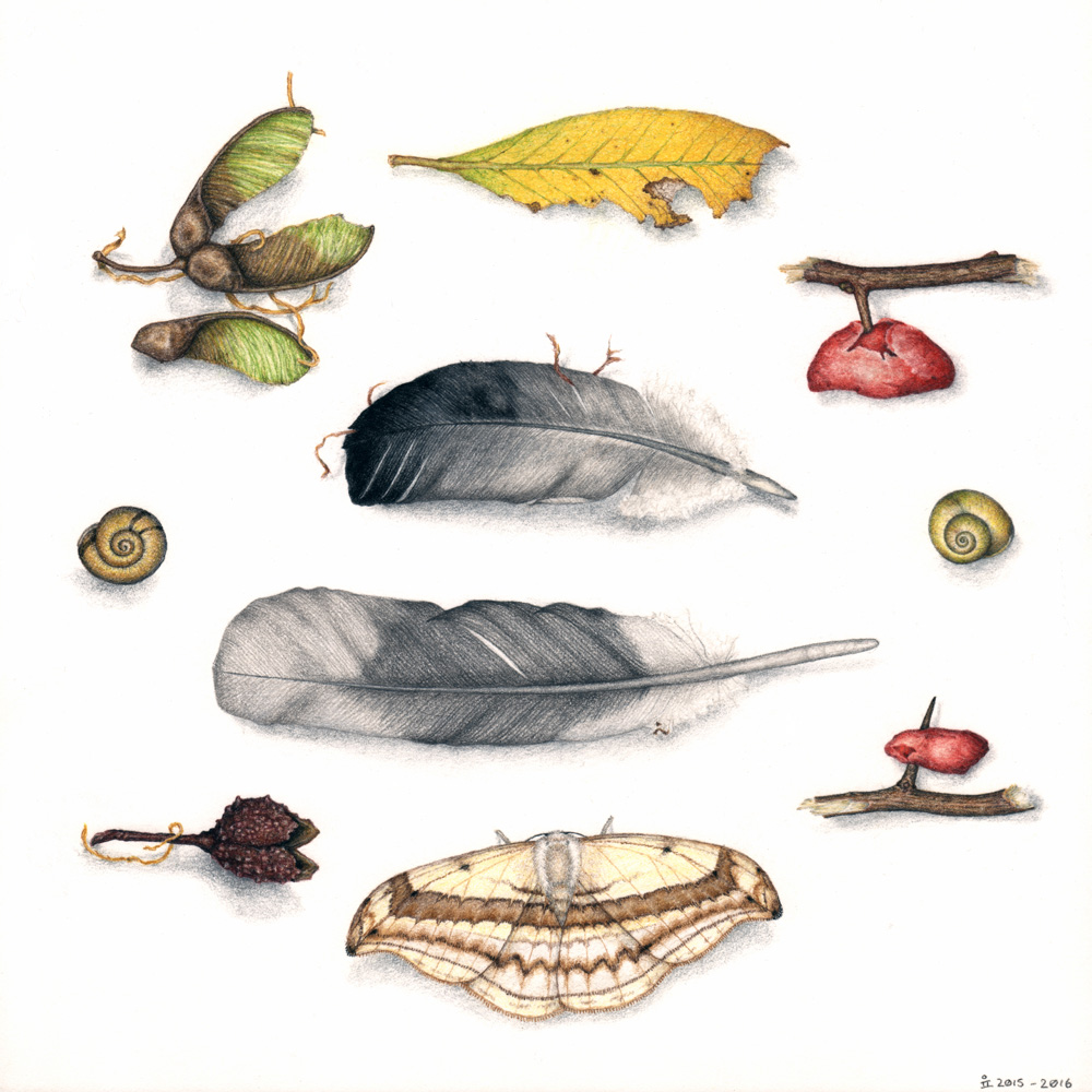 A colour pencil drawing of a range of debris objects, including fallen feathers, leaves, and seeds.