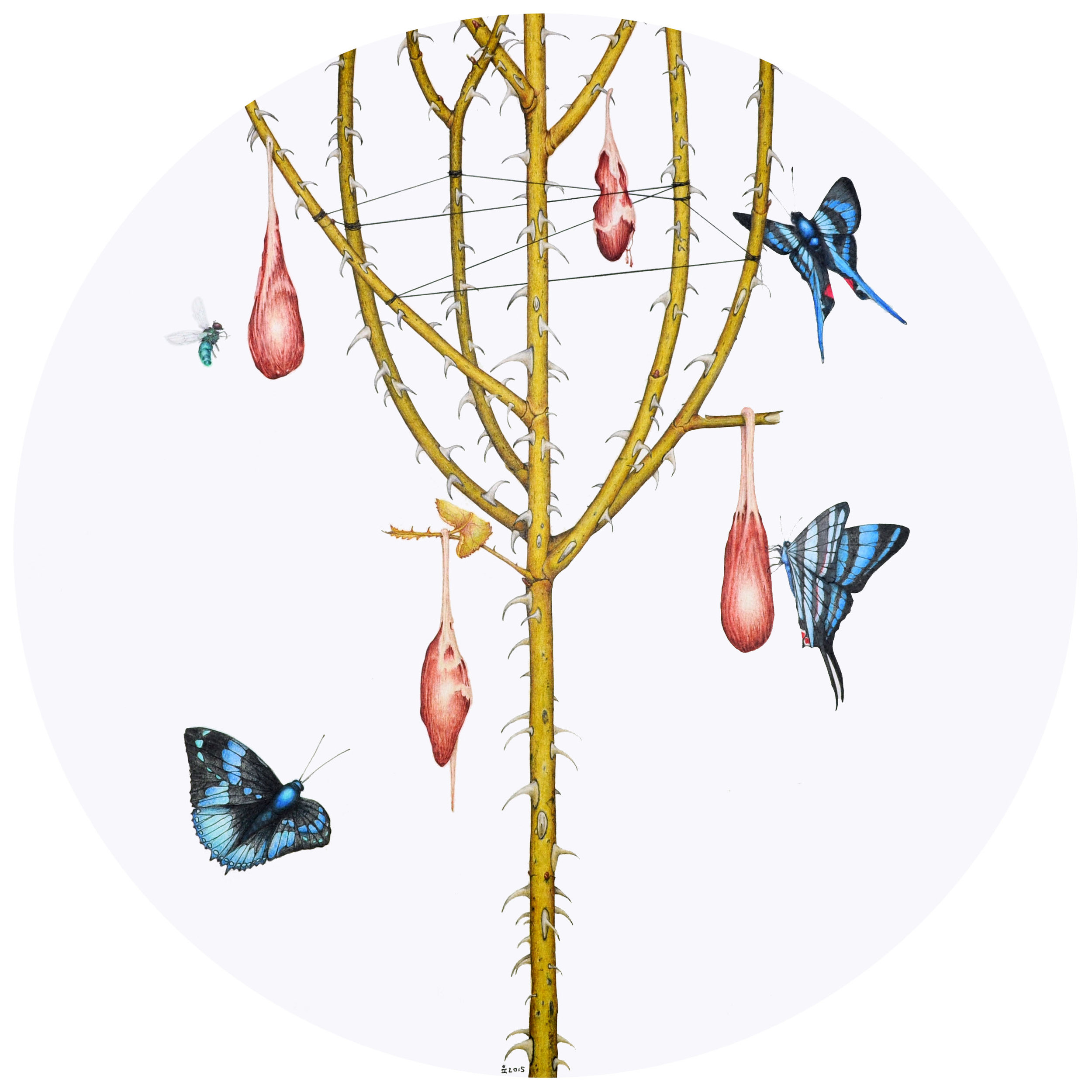 A colour pencil drawing of a spiny branching twig, with flesh objects hanging off it, and blue butterflies flying around it.