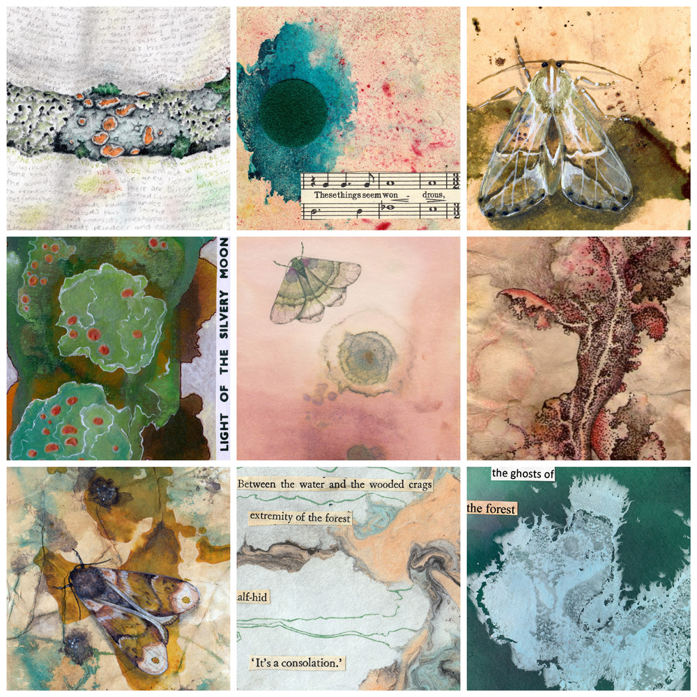 A collage of 9 images of lichen-like patterns, lichen drawings, and cryptic moths