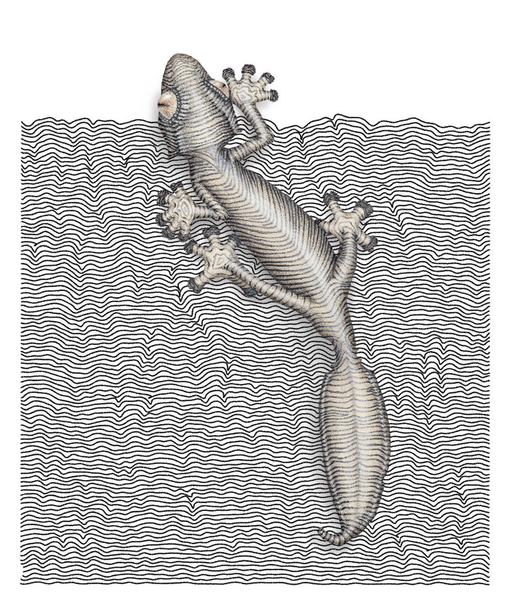A painting of a leaf tailed gecko painted over a black and white pattern on a white piece of paper. The pattern made of rows of wavy lines. The gecko is in shades of buff and grey.