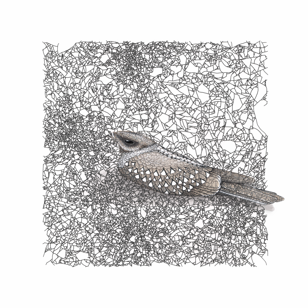 A painting of a nightjar (a type of small bird) painted over a black and white pattern on a white background. The pattern is made from many small lines forming a fracture pattern. The bird is in shades of buff and grey.