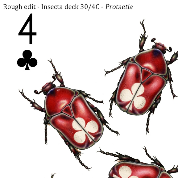Image description; the corner of a 4 of clubs playing card design made in colour pencil. It features 4 cherry red chafer beetles, each with a white club symbol on it's back.