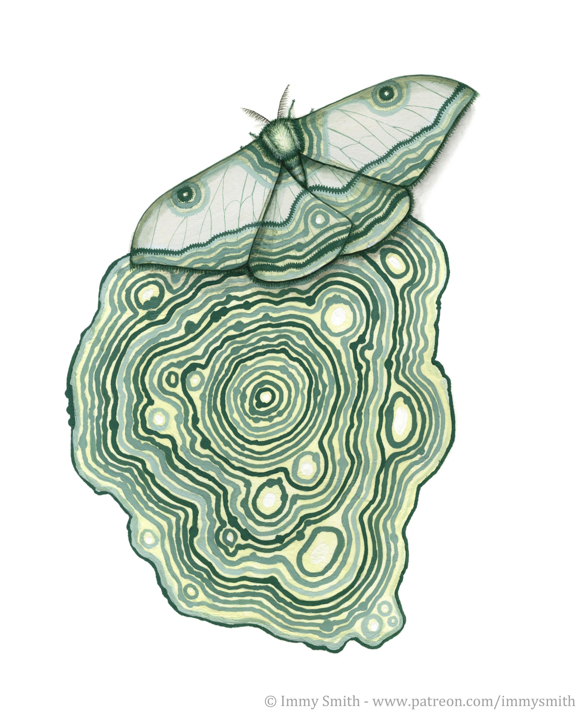 Lichen_pattern_moth.jpg