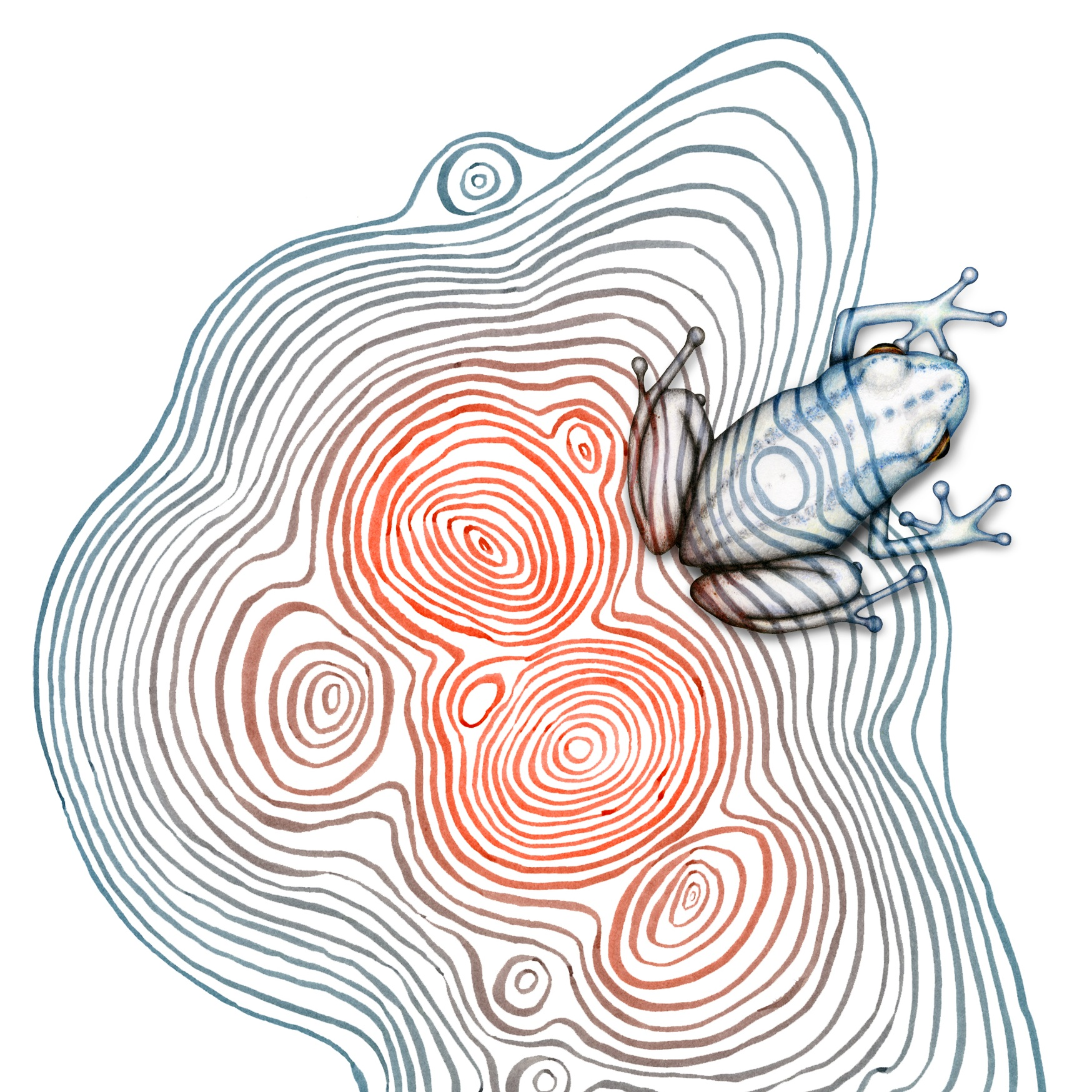 Image description; a small frog being drawn over an ink pattern made of concentric layers of orange changing to teal ink. The frog's skin is being drawn to camouflage it on the underlying pattern.