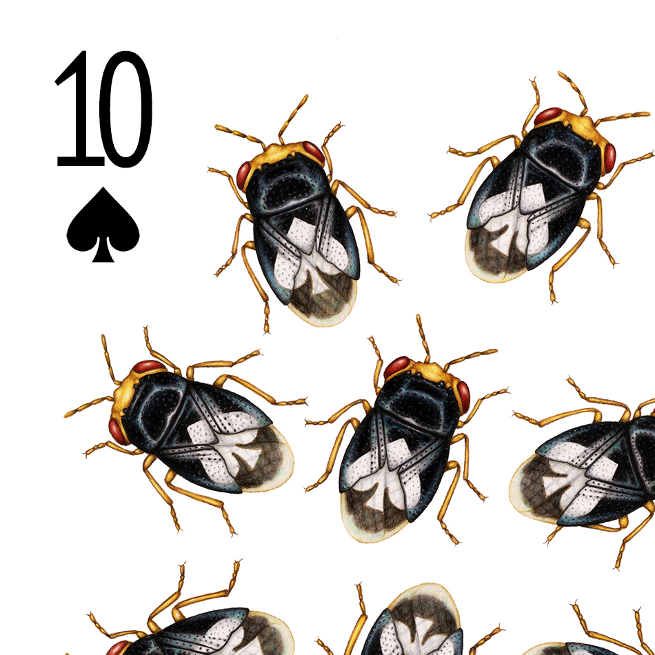 Image description/alt text; the top left corner of a playing card design featuring 10 big-eyed bugs, each with a white spade symbol on its back.