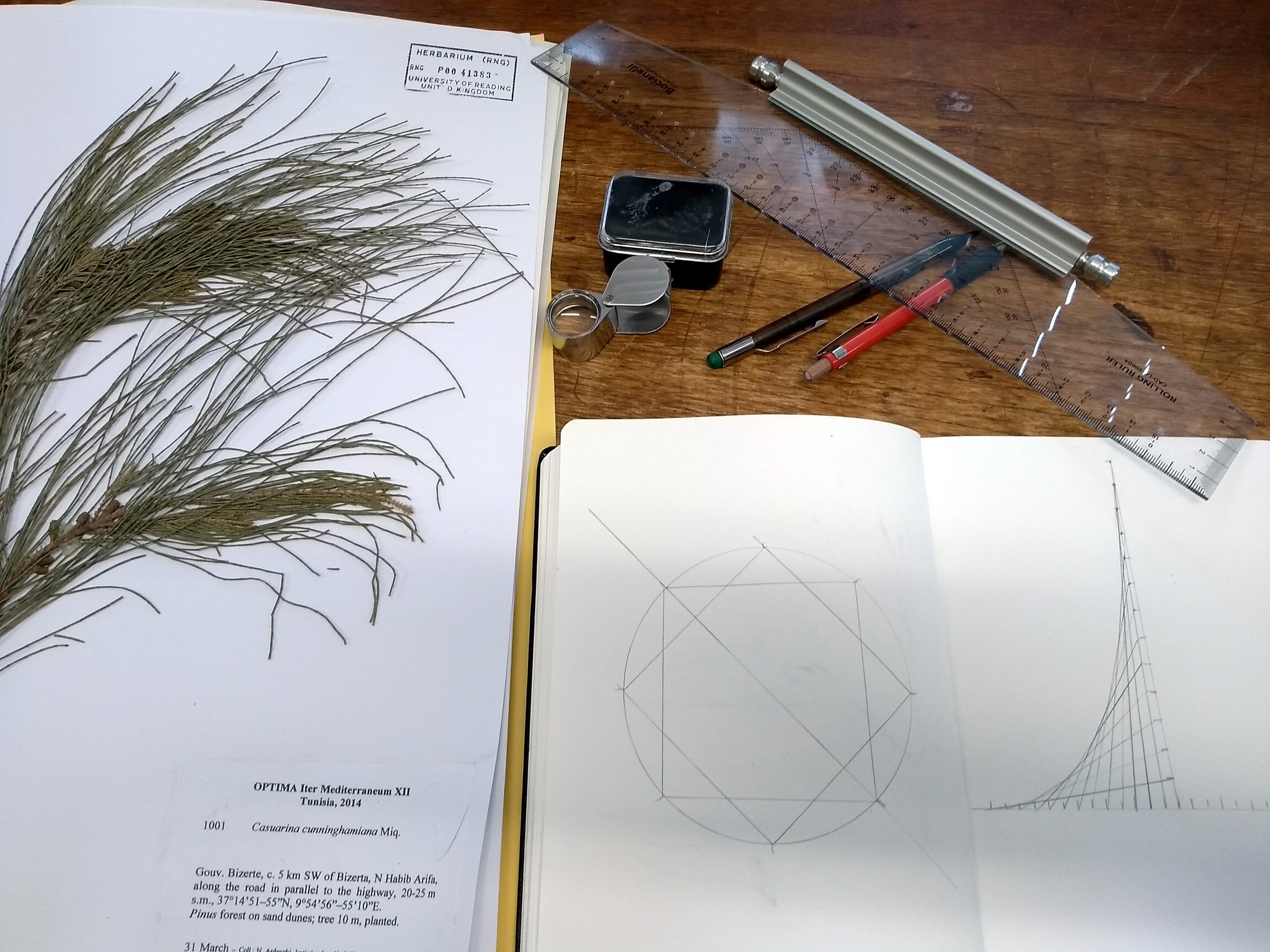 My notebook on the herbarium bench next to the casuarina specimen