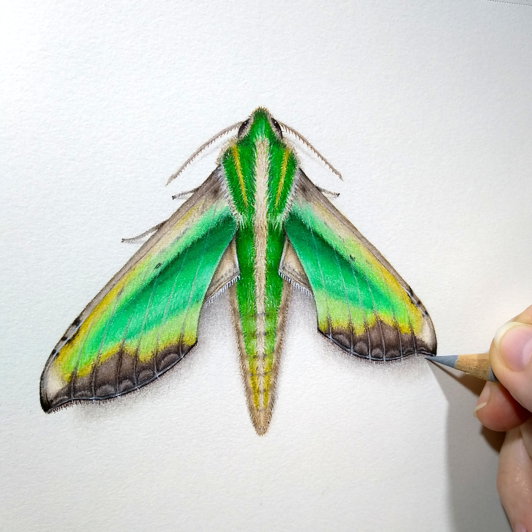 More WIP on that moth. Gotta love the greens!