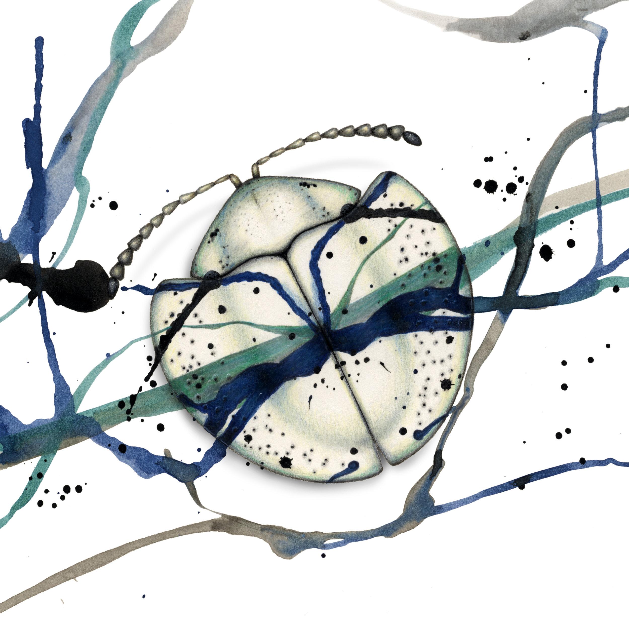 Studio-dwelling Coleoptera - beetles