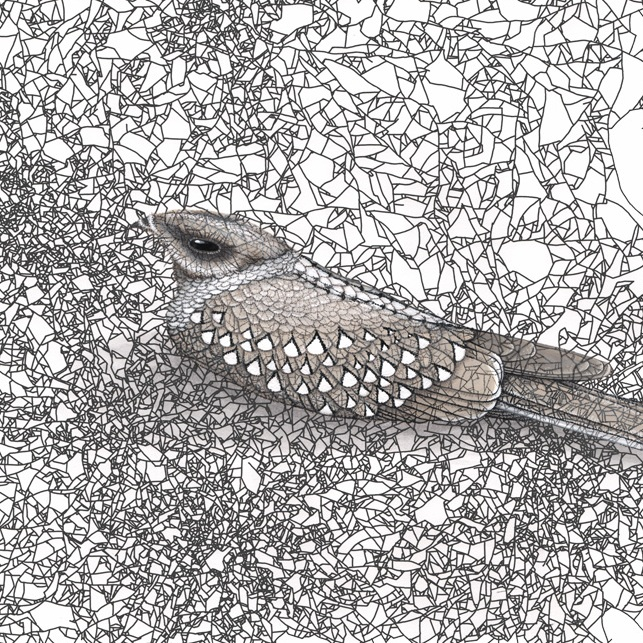 Generative animals - other orders