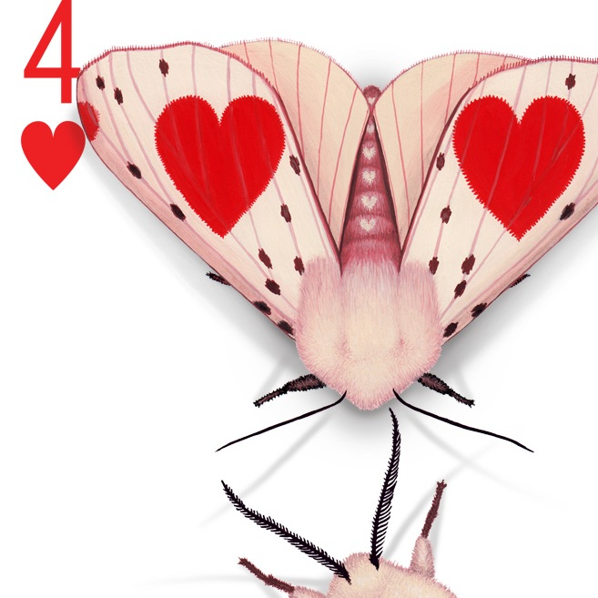 Deck-dwelling Lepidoptera - moths