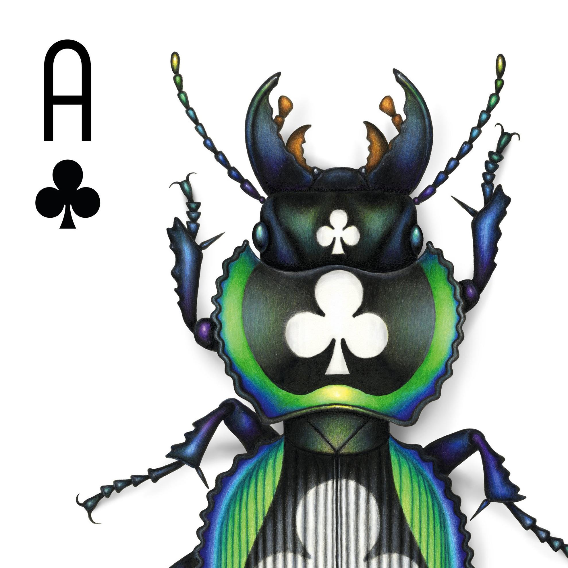 Deck-dwelling Coleoptera - beetles