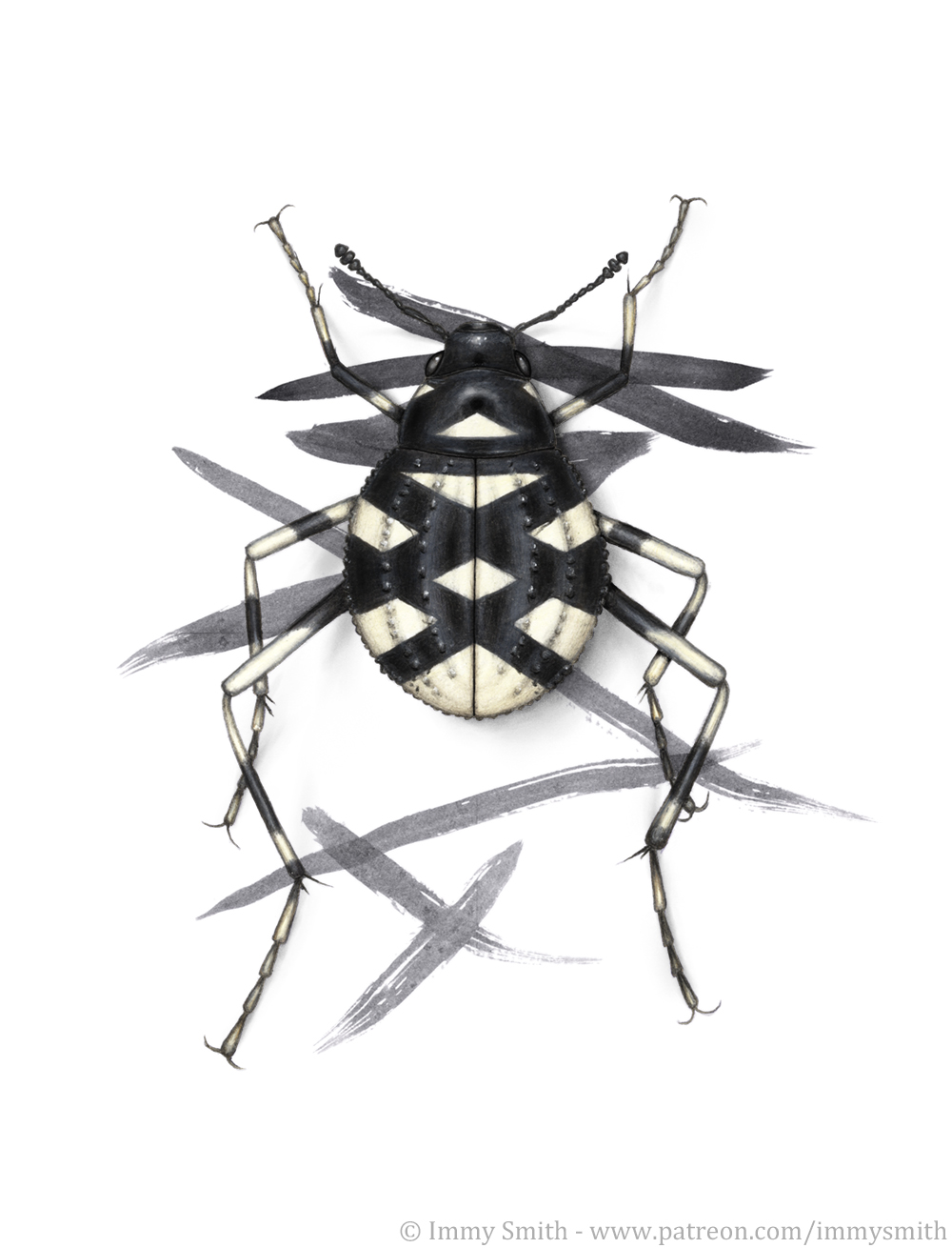 An ink mark-mimic tok-tokkie beetle   [Image description; a black and white tok-tokkie beetle drawn over a page of abstract ink markings, with its body coloured to mimic the underlying pattern]