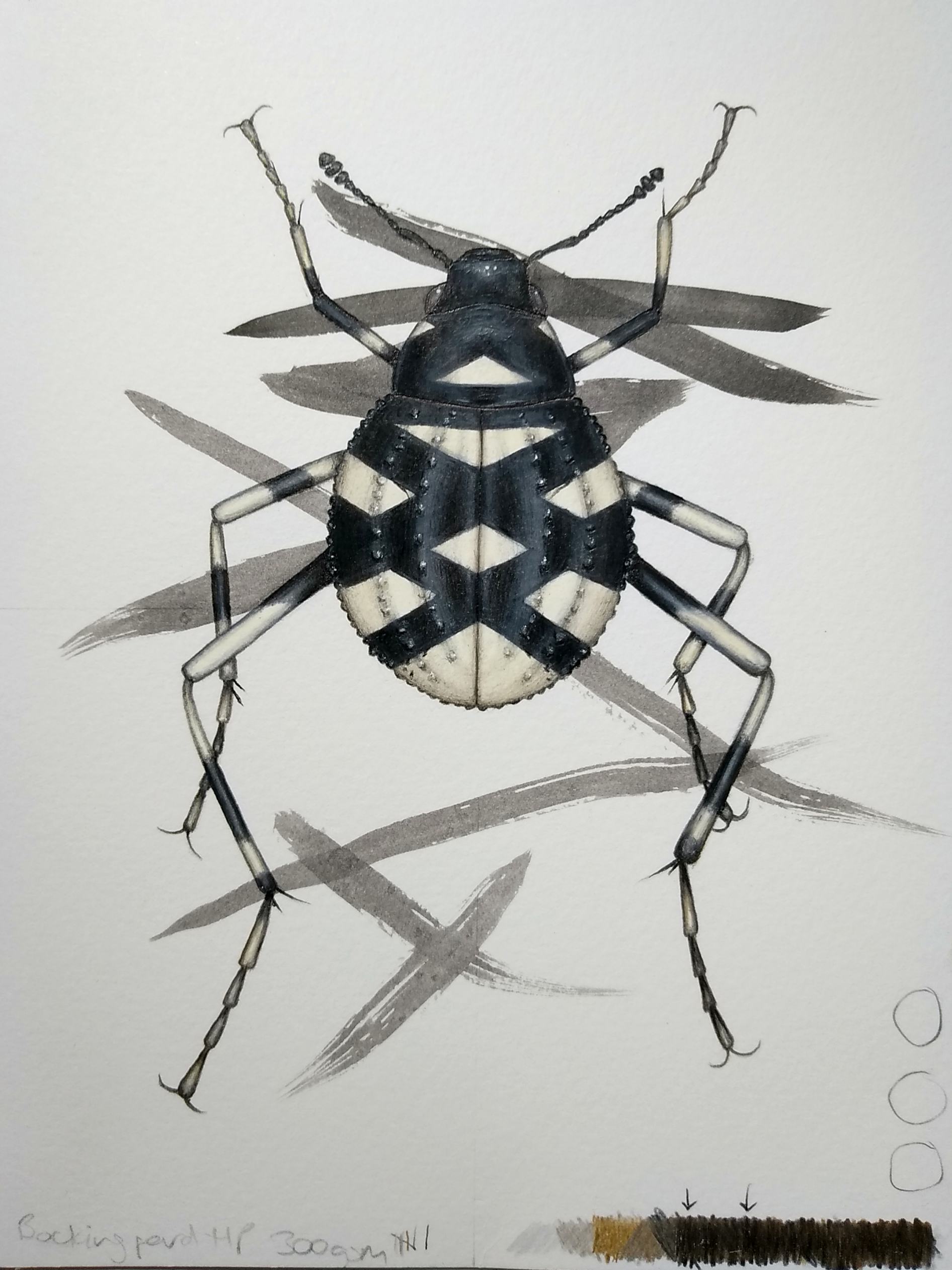 Image description; a drawing of a black and white beetle being made over a page of abstract ink scribbles