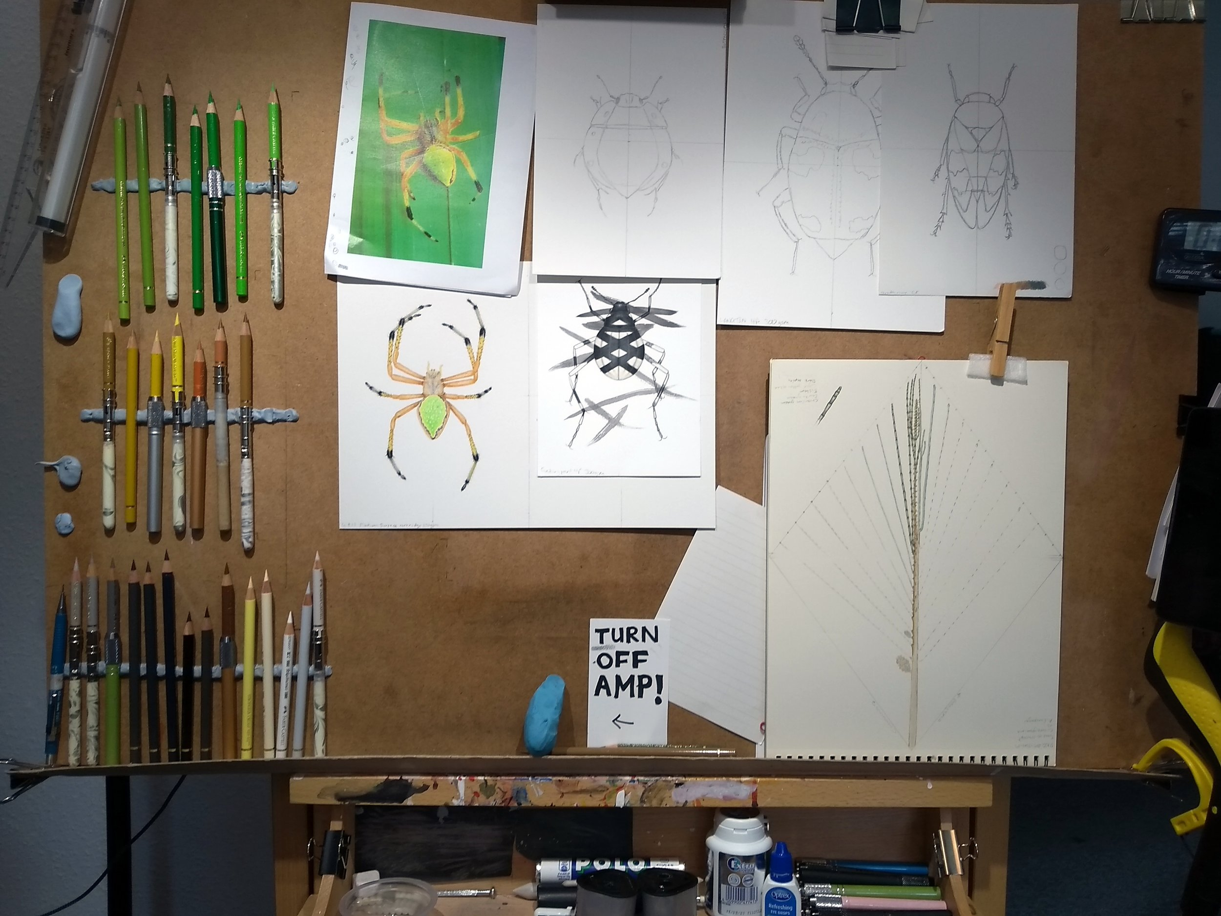 Image description; my drawing board, with many colour pencils blue-tacked to it, and covered in drawings of insects