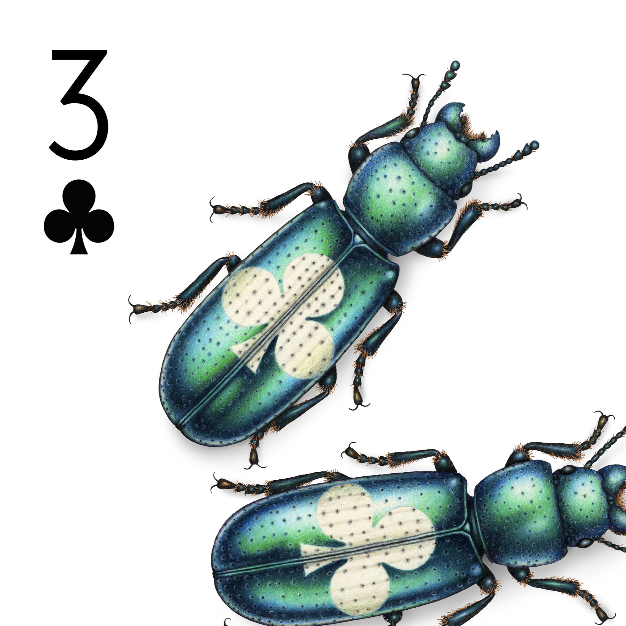 Image description; the top left corner of a playing card design featuring three bark-gnawing beetles, each with a white club symbol on its back.