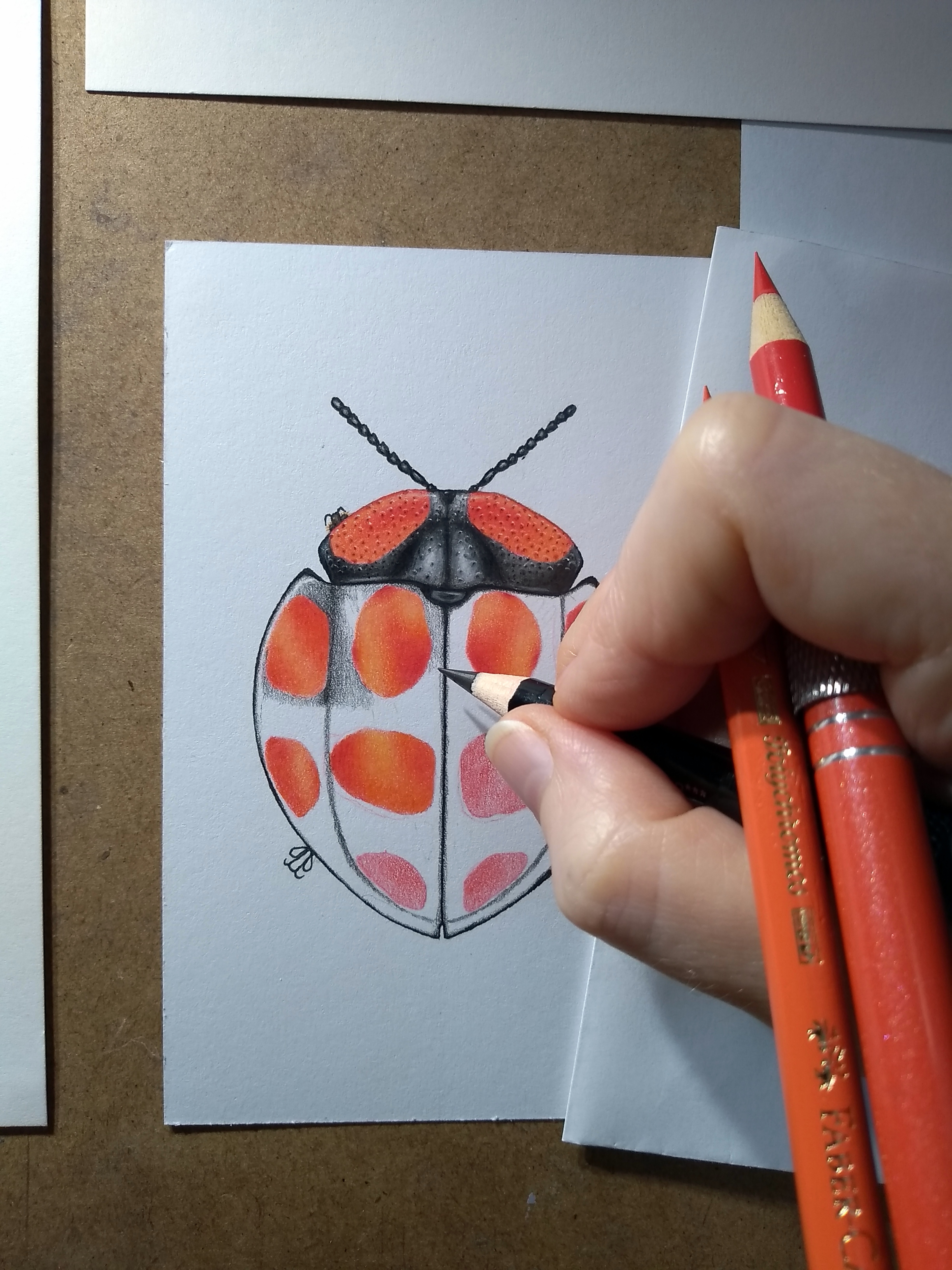 Image description; a WIP series of a black red-spotted tortoise beetle in the genus Botanochara, being drawn in colour pencil.