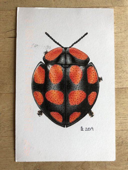 Image description; the tortoise beetle postcard drawing as it arrived in the US, and eing inspected by small black kittens