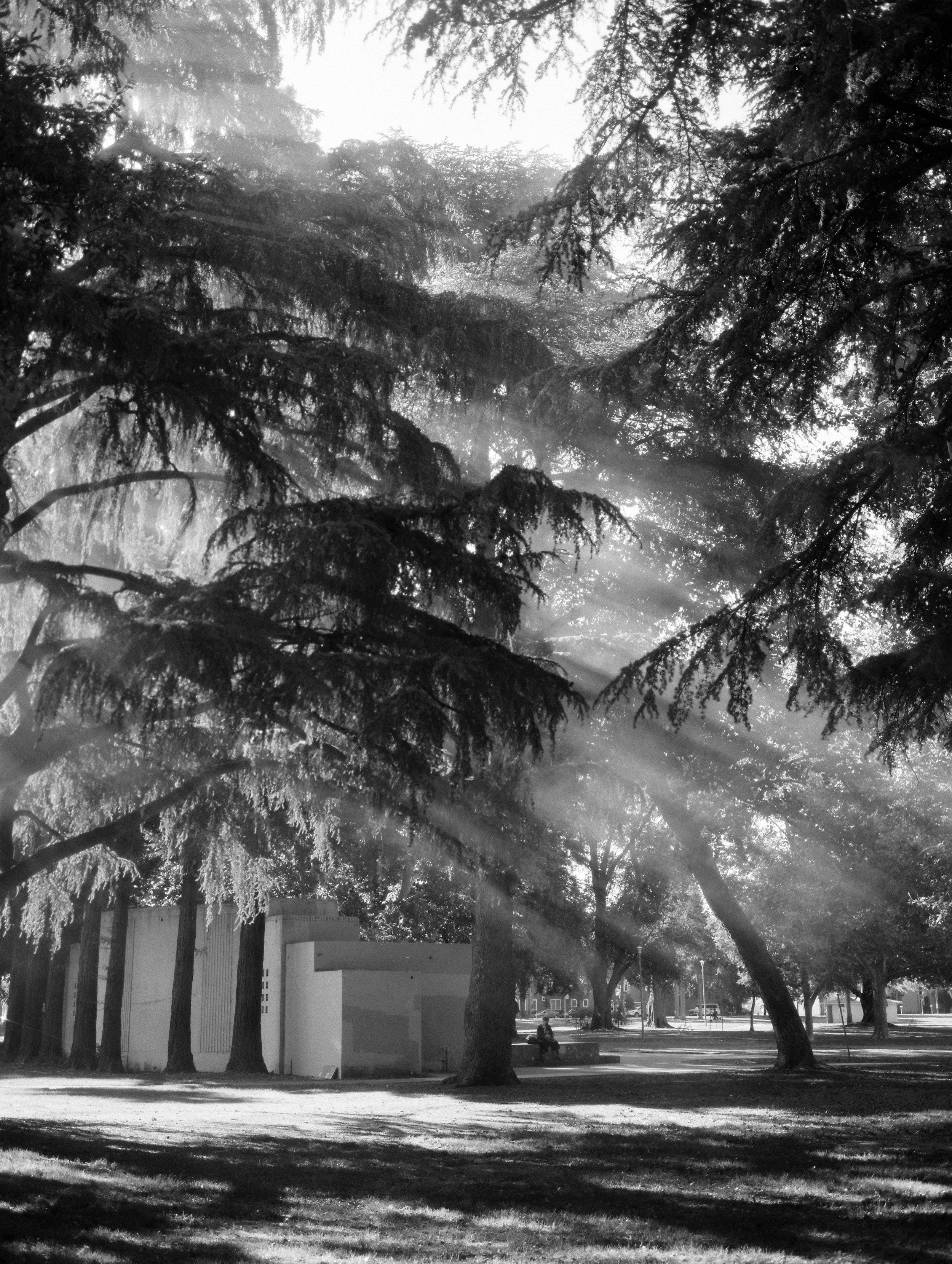 southsidepark-sacramento-blackandwhite-photography by Rachel Sima Photography