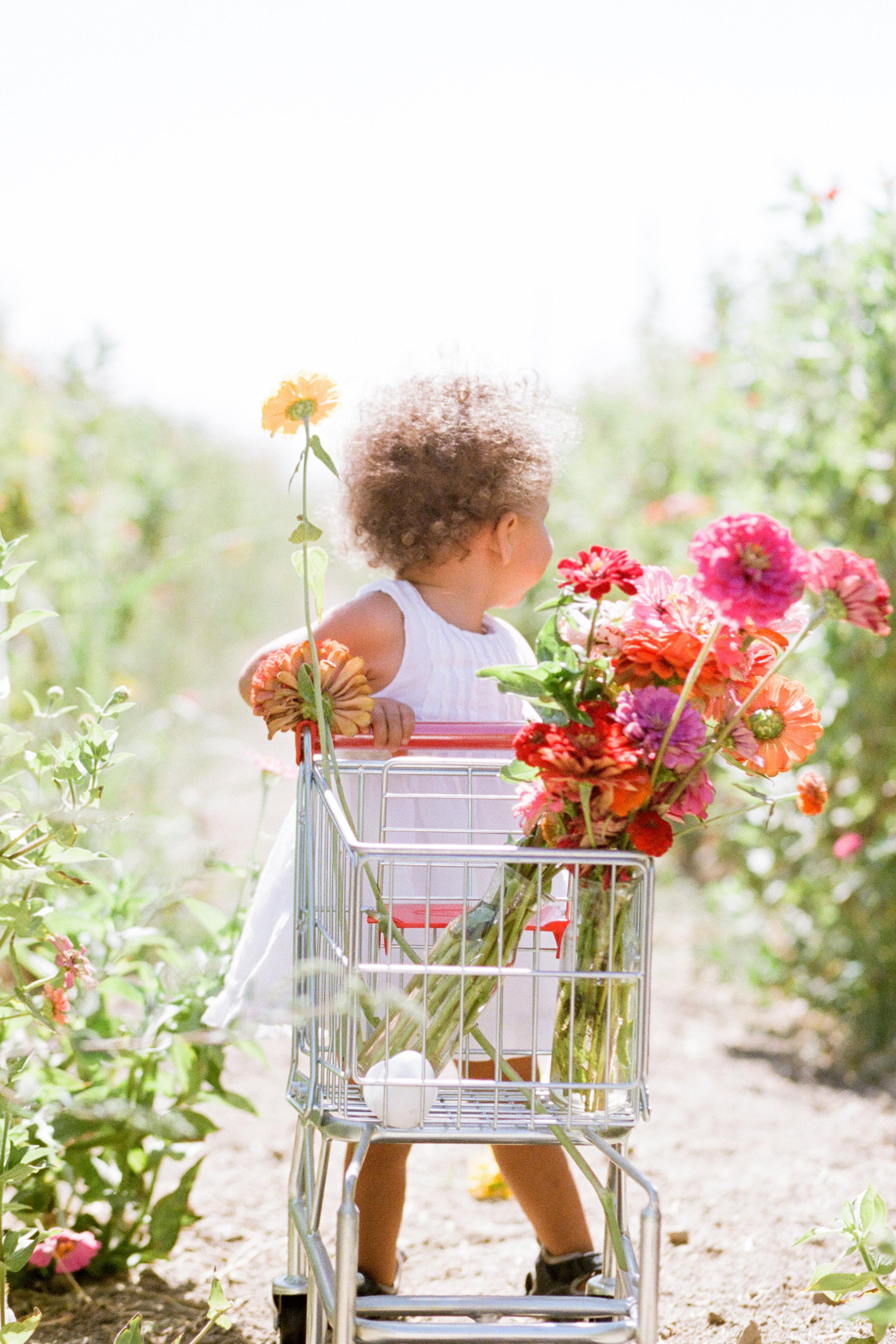 zinnia-baby-california-flowers-baby-photograph by Rachel Sima Photography