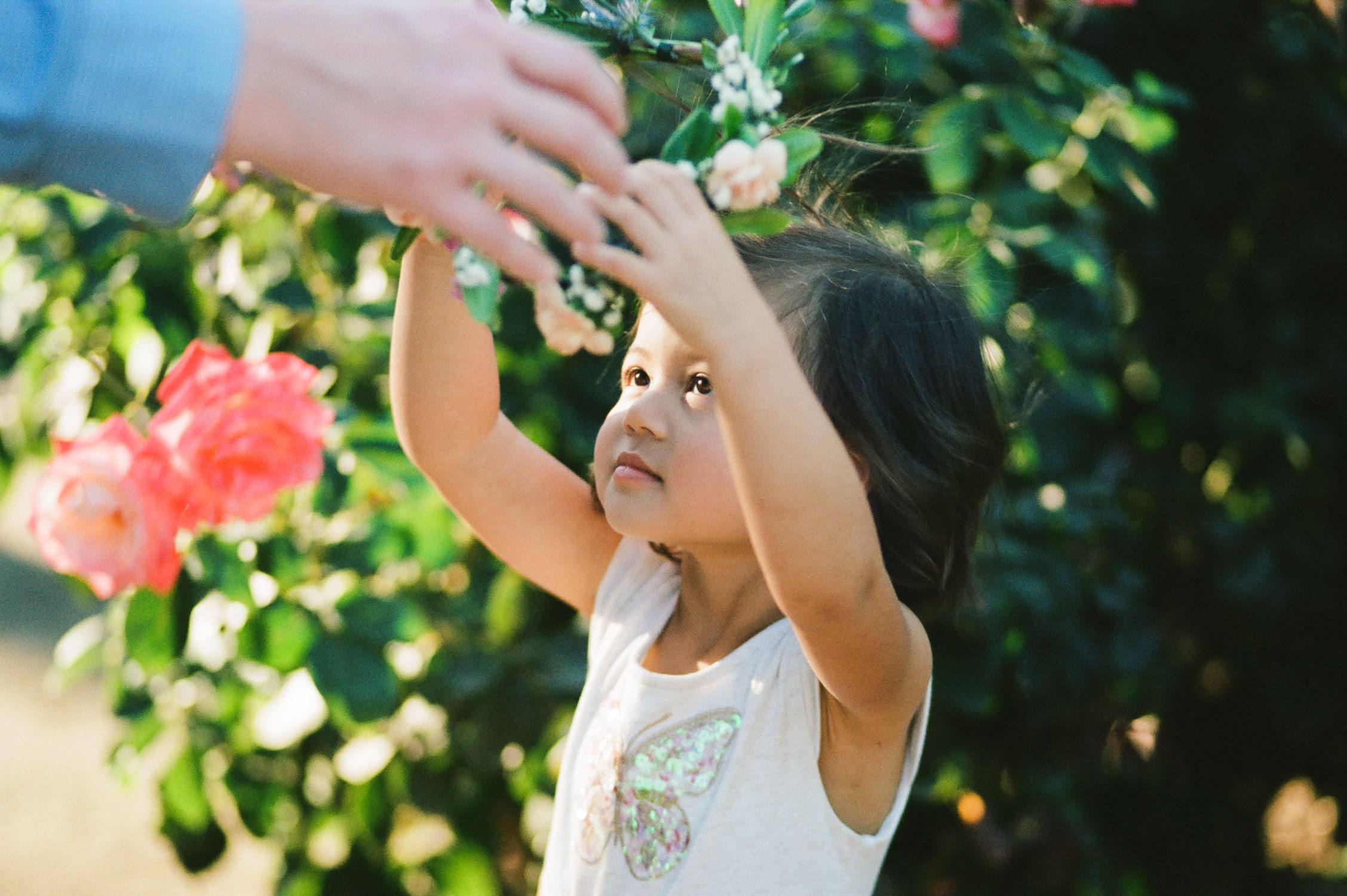 family photography of a toddler by rachel sima photography