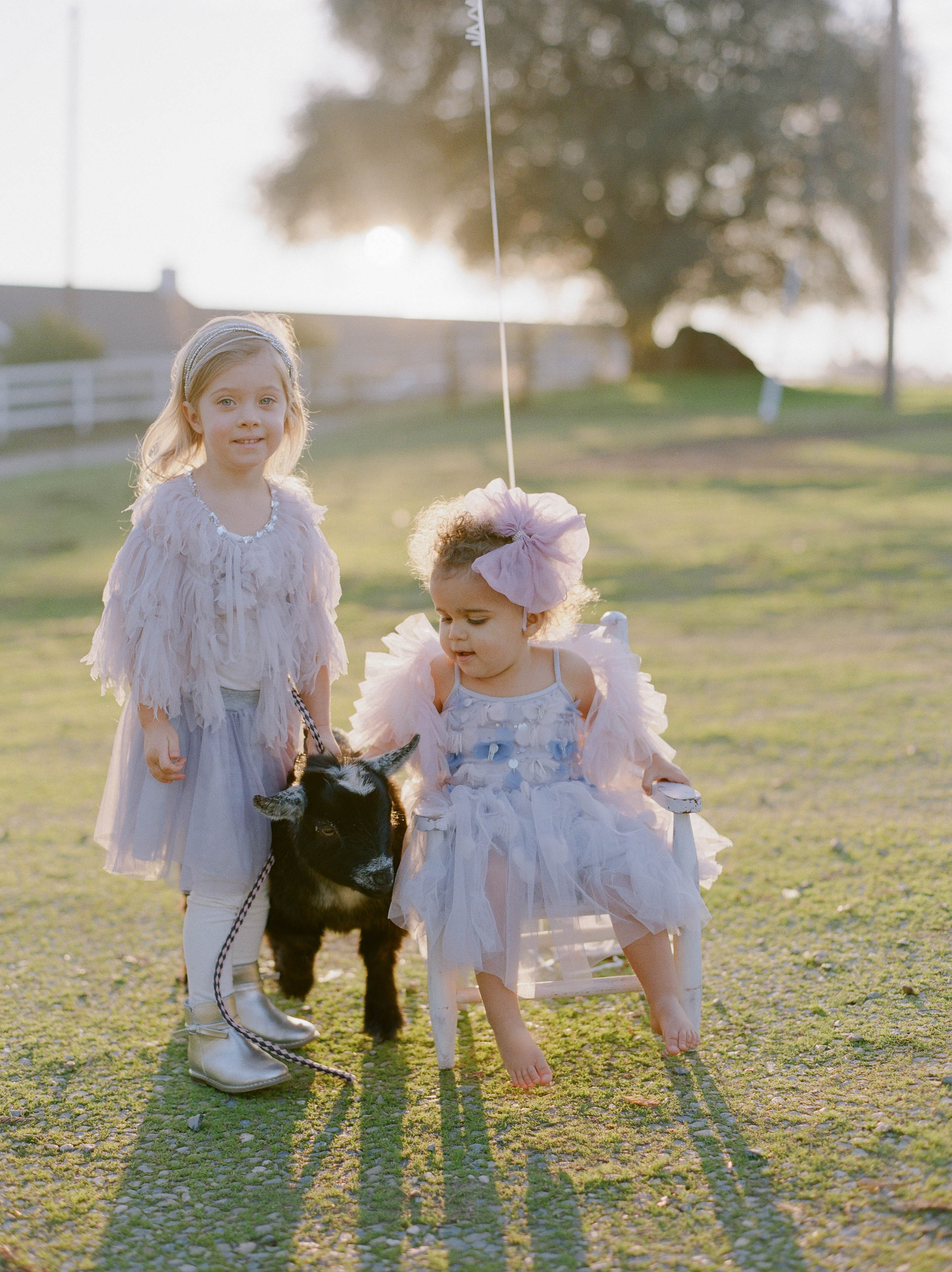 Dreamy second birthday with animals in northern California