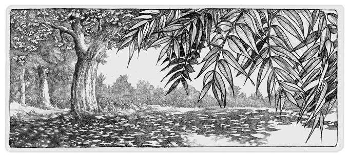 Summer Trees (2011)