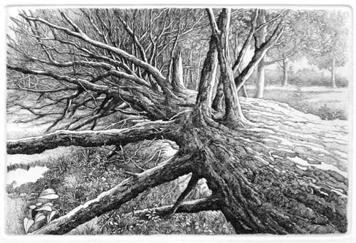 Tree Down (2009)