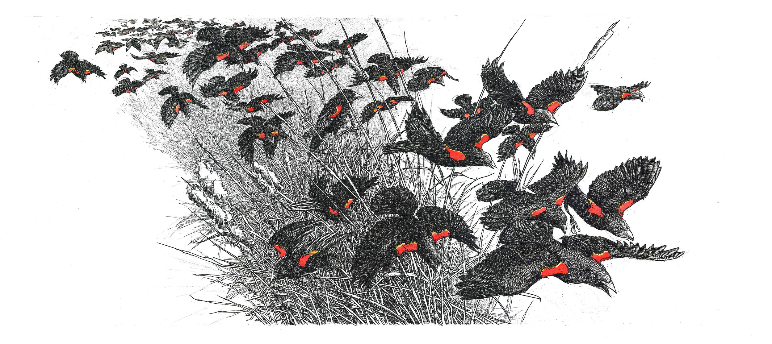 Red-winged Blackbirds II (2017)
